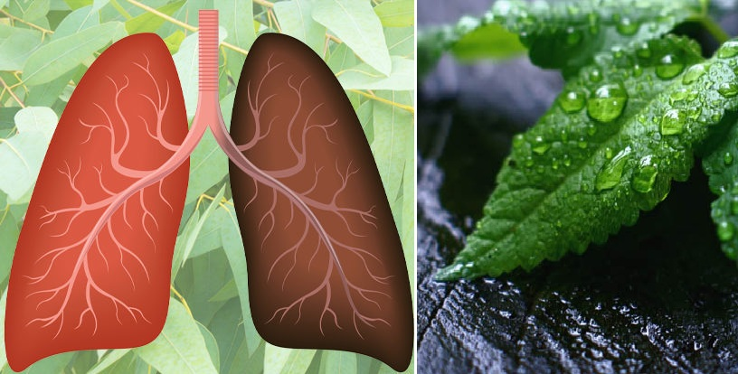 You are currently viewing Are You Short Of Breath? Here Are The 15 Most Powerful Herbs For Your Lungs' Health