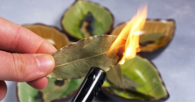 You are currently viewing This Is What Happens If You Burn A Bay Leaf In Your Home (Plus 7 Other Uses)
