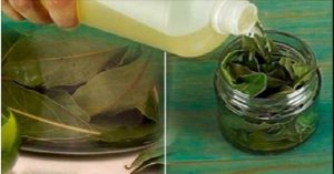 Read more about the article This Leaf Is A Blessing From God: Fight Insomnia, High Blood Pressure, Sugar And Blood Fat